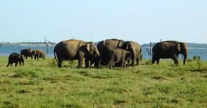 elephants by lake by Takiako-Nakashi