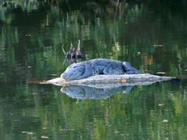 crocodile by Takiako-Nakashi