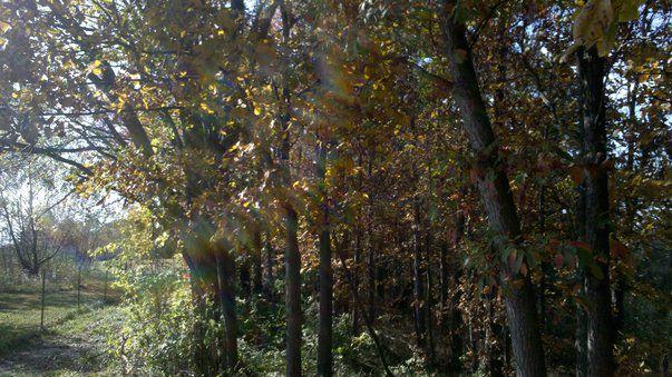 Early Autumn by ElderAmaranthine