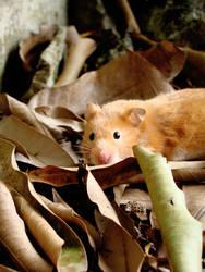 autumn of a hamster. by sunakokumi
