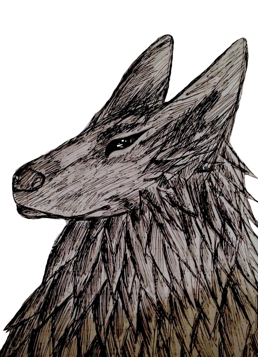 Wolf by HaloExodus