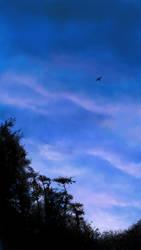 Fly away by Silnaur