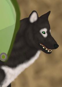 QuietOwl's Profile Picture