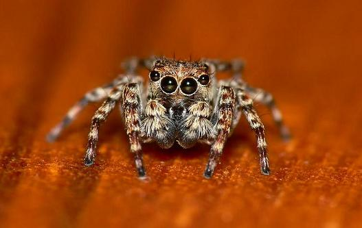 jumping spider by nature-photoLT