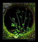 Pure and Green by Dredged