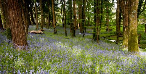 Purple Woods by bpme