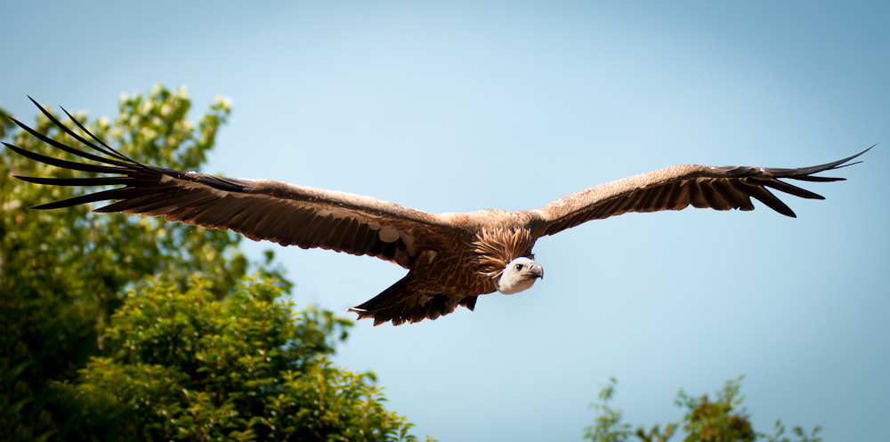 Vulture by bpme