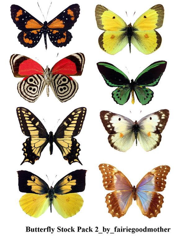 Butterfly Stock Pack 2 by FairieGoodMother