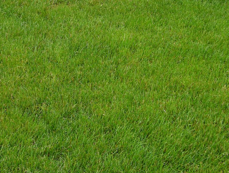 Grass Stock by FairieGoodMother
