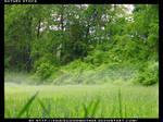 Misty Meadow Stock