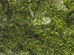 Moss Covered Rock Texture 2