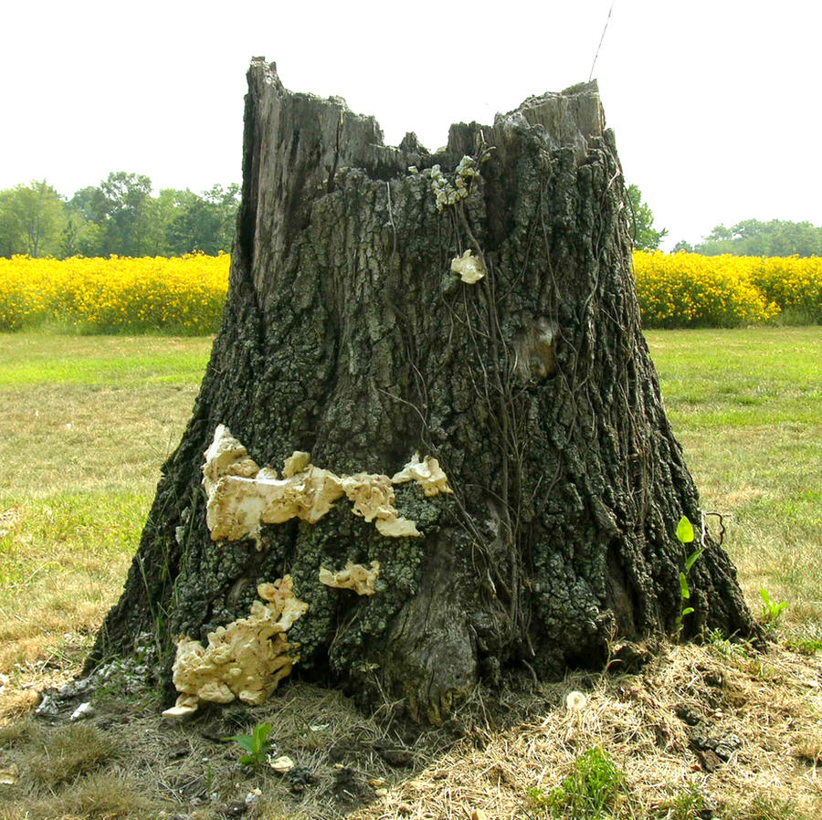 Tree Stump with Fungus by FairieGoodMother