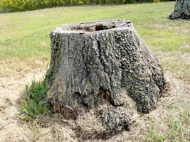 Tree Stump stock 3 by FairieGoodMother