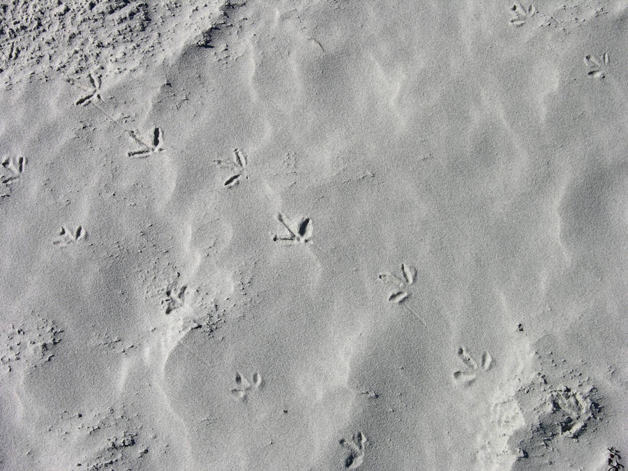 Bird Prints in the Sand by FairieGoodMother
