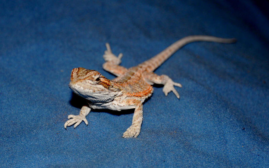 good names for baby bearded dragons