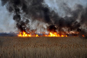 Grass Fire Stock 2 by FairieGoodMother