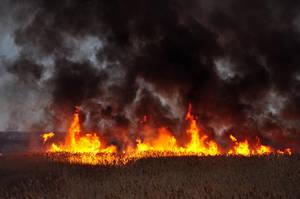 Grass Fire Stock 17 by FairieGoodMother