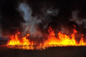 Grass Fire Stock 19 by FairieGoodMother