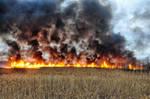 Grass Fire Stock 21