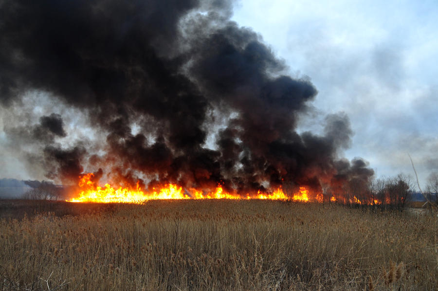 Grass Fire Stock 22