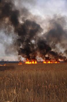 Grass Fire Stock 24