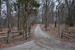 Wooded Dirt Road