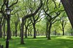 Central Park Stock 75
