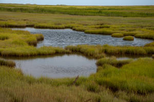 Wet Lands stock 1 by FairieGoodMother