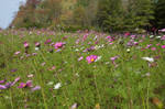 Field of Wildflowers 5