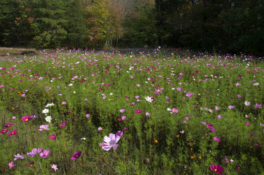 Field of Wildflowers 12 by FairieGoodMother