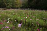 Field of Wildflowers 12