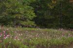 Field of Wildflowers 14