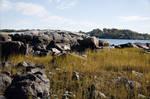 Winter Island 27