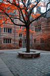 Yale University Stock 21