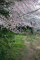 Cherry Blossom Festival 026 by FairieGoodMother