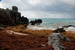 Bermuda 245 by FairieGoodMother