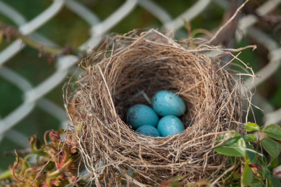 Bird Nest with Eggs 02 by FairieGoodMother on DeviantArt