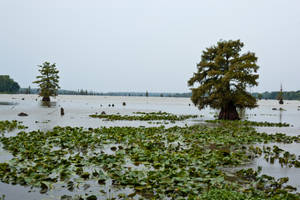 Lake Conway Ark 01