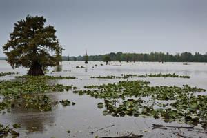 Lake Conway Ark 02