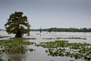 Lake Conway Ark 03