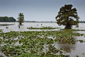 Lake Conway Ark 04