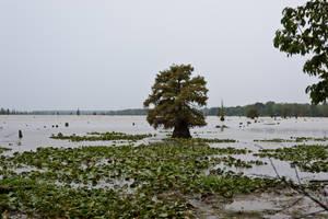 Lake Conway Ark 06