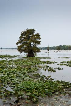 Lake Conway Ark 07