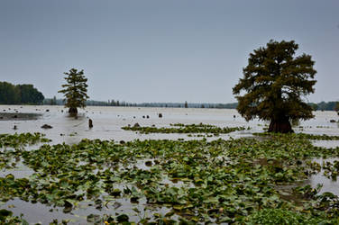 Lake Conway Ark 09