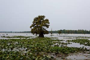 Lake Conway Ark 10