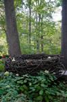 Winterthur Encanted Garden 24