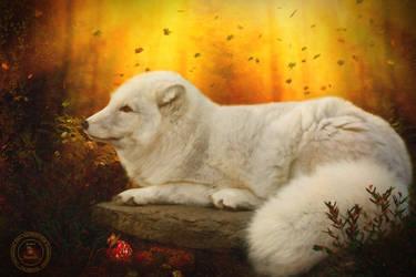 Pretty Little Fox by FairieGoodMother