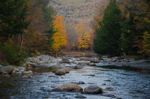 White Mountains  Fall Foliage  181 by FairieGoodMother