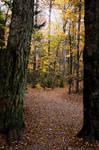 White Mountains  Fall Foliage  196