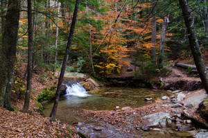 White Mountains  Fall Foliage  263 by FairieGoodMother